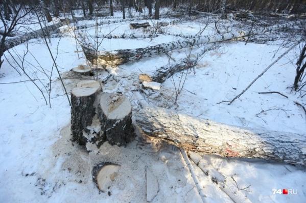 Сегодня в сквере на Захаренко деревья обследовали лесопатологи — эксперты по деревьям