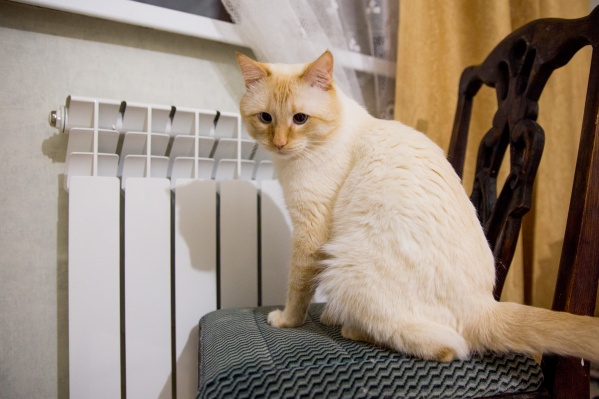Квартира обогревалась от газового котла, но в управляющей компании продолжали выставлять счета за теплоэнергию