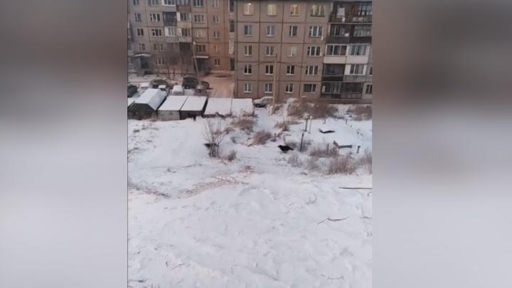 Стая бездомных собак устроила забег у школы в Водниках и напугала жителей