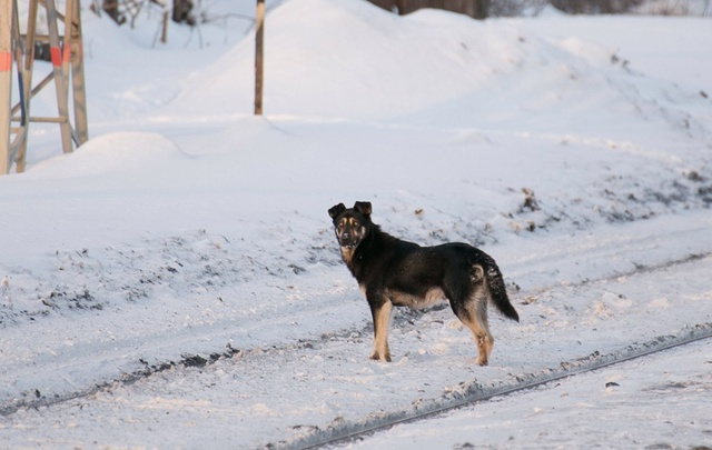 В Уфе владелец предприятия заплатит рублем за собаку, покусавшую девочку