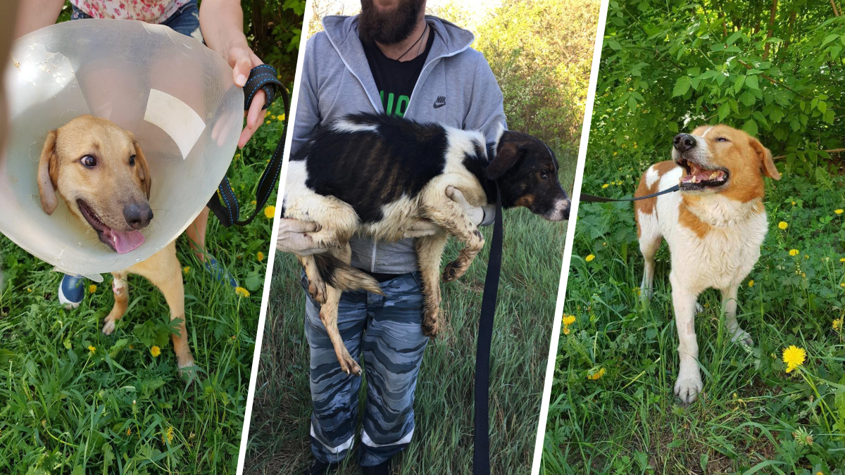 Найден новый «собачий концлагерь» в Выксе: кто и зачем запер животных в заброшенных садах