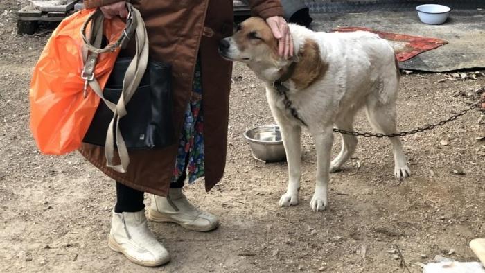 Оказалось, что собака сбежала около двух недель назад. Она жила на улице Кропоткина —на правом берегу, а нашли её на левом, недалеко от аквапарка