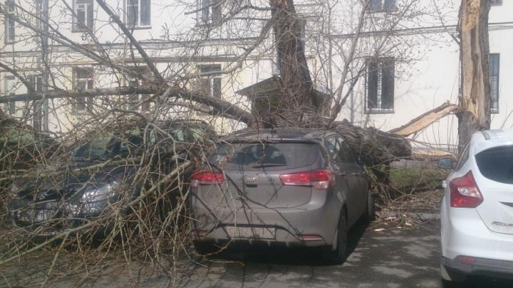 Сдувает: в Челябинске на машину упало дерево и с корнем вырвало рекламный щит