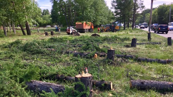 «Не так поняли»: на кольце Блюхера — Дарвина в Челябинске продолжили вырубку деревьев