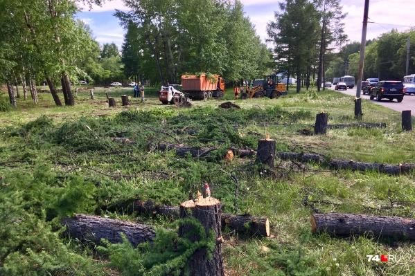 Деревья рядом с оживлённым автомобильным кольцом начали рубить 3 июня
