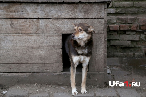 Домашних животных следует своевременно прививать, для животных бешенство смертельно в большинстве случаев