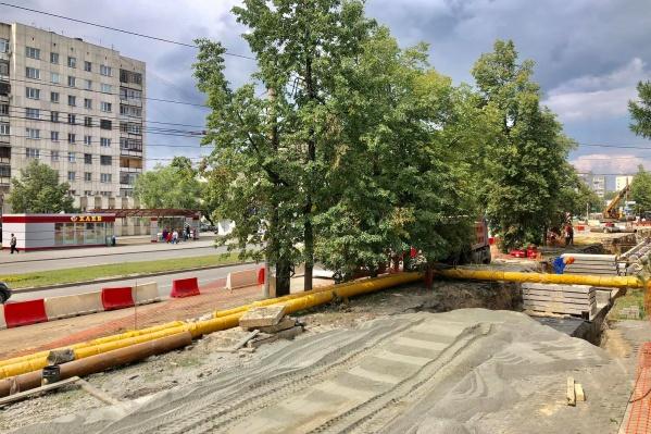 Подрядчик хотел срубить взрослые деревья, которые якобы мешали проезду техники
