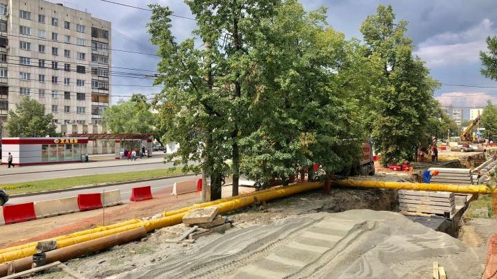 «За что деревья недолюбливают?»: директор челябинского комплекса — о том, как дают добро на вырубку
