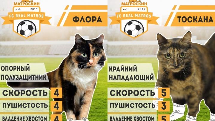 Мидия и Джокер из Real Matros. Пермский приют «Матроскин» нарисовал котиков на футбольных карточках