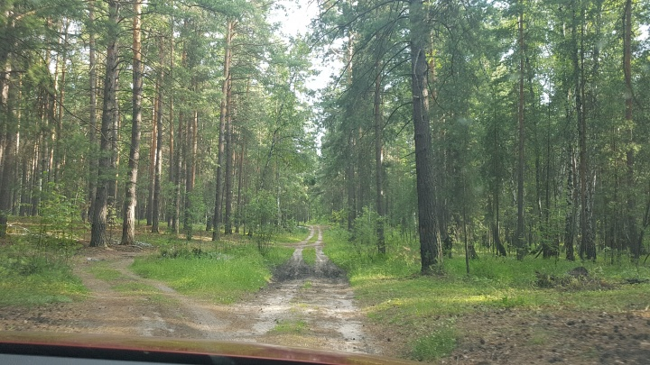 В Зауралье арендаторам лесов пригрозили расторжением договоров за неуплату