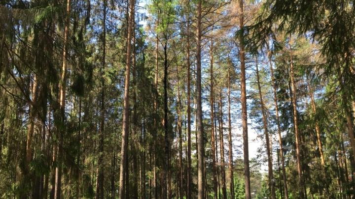 Пермяки выйдут на митинг в защиту леса, где планируют построить новую инфекционную больницу