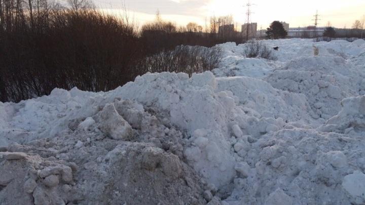 Вместо полигона сваливают в поле или частный сектор: тюменцы жалуются на незаконный вывоз снега