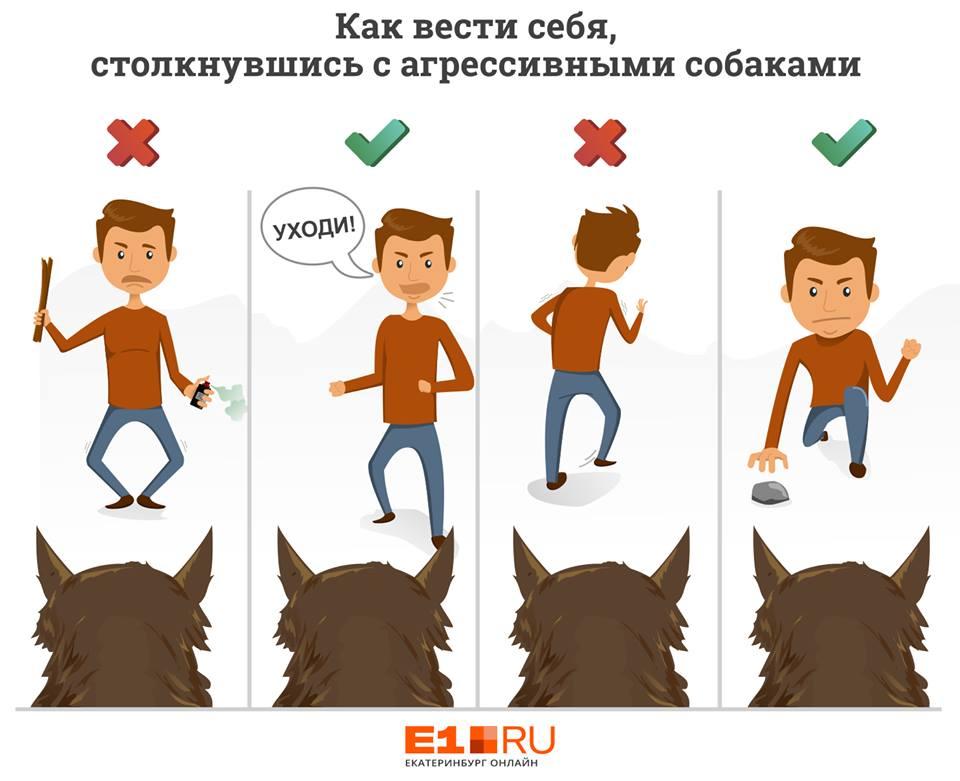 «Не показывать свой страх»: советы уральского кинолога, что делать, встретив агрессивную собаку