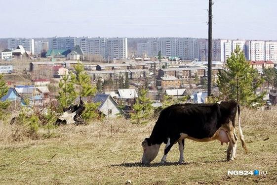 Административный центр района — город Кодинск. Его бюджет лишился 365 тысяч рублей, которые чиновник положил в свой карман