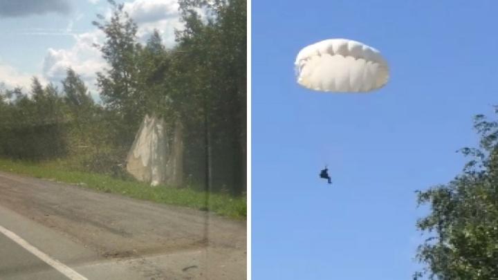 В Ярославле парашютист неудачно приземлился на дерево