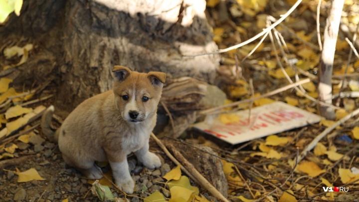 «Не оставляй меня на даче!»: волгоградцев попросят не издеваться над животными