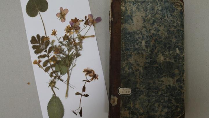 Закладки со сроком: в раритетных книгах челябинской библиотеки нашли иглу и гербарий XIX века