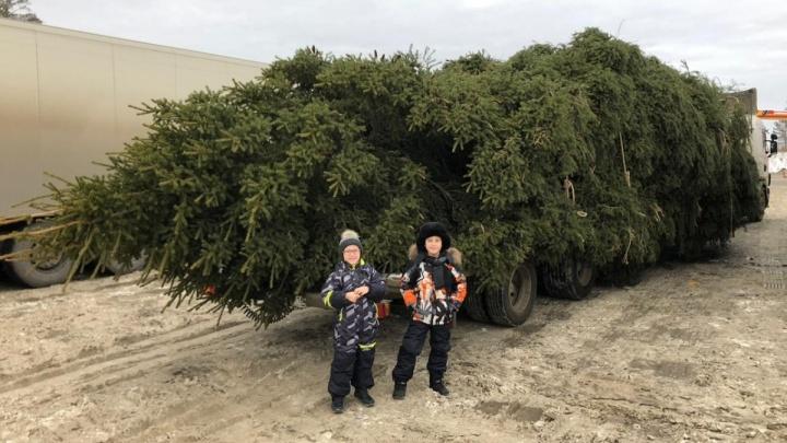 «За разрешением никто не обращался»: фура с гигантской елкой так и не выехала в Екатеринбург
