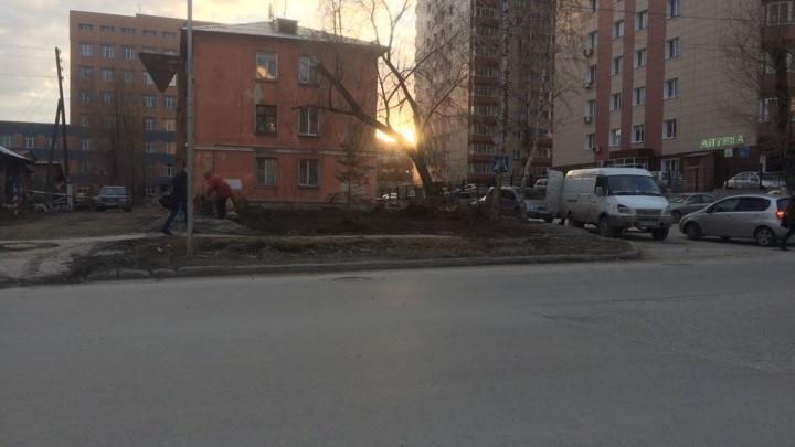 На улице Семьи Шамшиных вырубили деревья — чиновники заметили и требуют посадить их обратно
