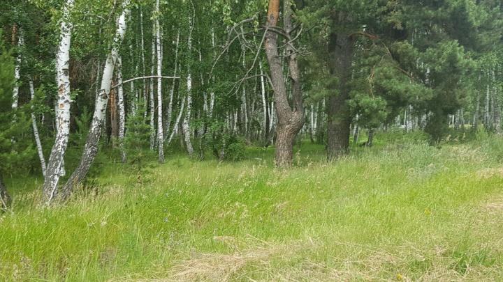 Мальчиков, пропавших вчера в лесу Шатровского района, нашли