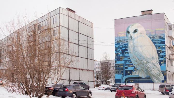 Сова размером с пятиэтажку: в Северодвинске появится новое мега-граффити