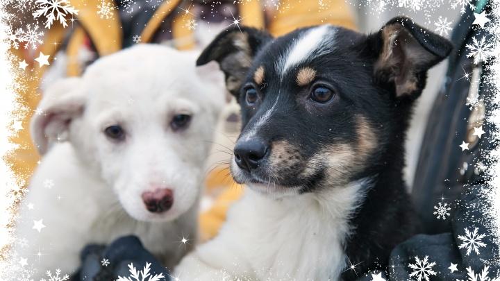 Они такие милые! Рождественская онлайн-раздача бездомных собачек