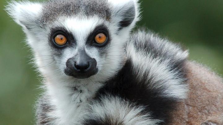 Животное-«призрак»: в ярославском зоопарке поселился интересный новичок
