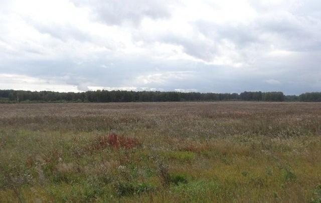 «Начинается активный сезон»: в Челябинске подскочили цены на пустующие земли