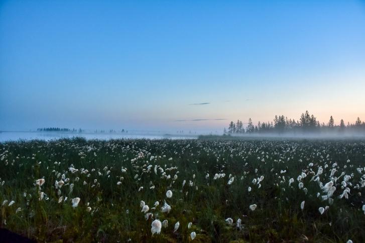Туман над мезенскими озерами — 27 июля этого года