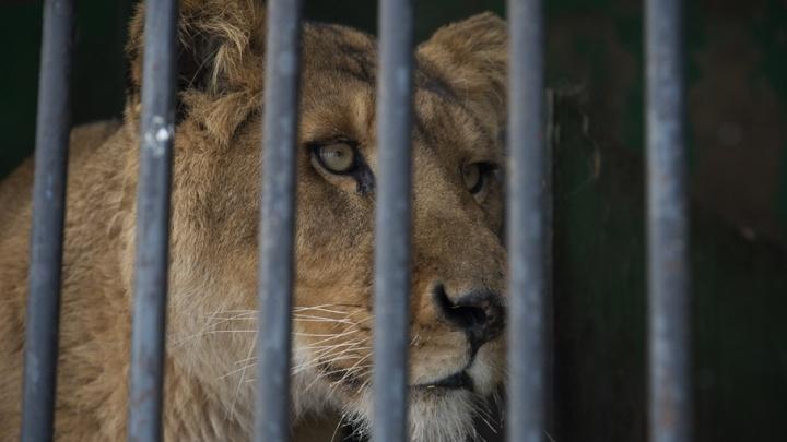 ВТБ и Всемирный фонд дикой природы продолжают сотрудничество по сохранению редких кошачьих