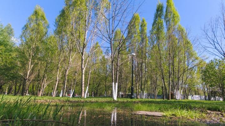Деревья в парках Самары обработают от клещей