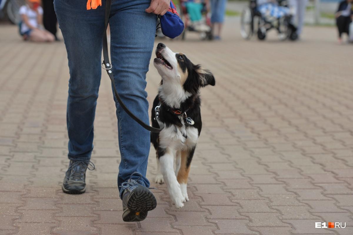 Этот щенок — представитель уже третьего поколения собак, которые каждый год бывают в онкоцентре