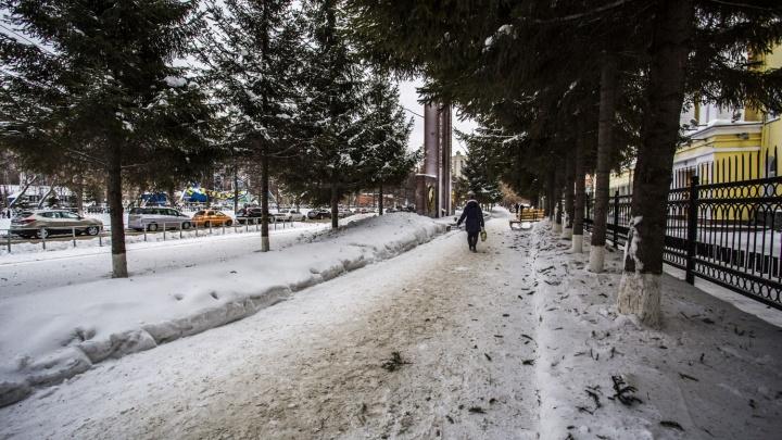 Грузные вороны переломали ветки на елях у Центрального парка