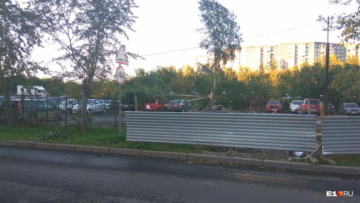 Падали деревья и знаки: ночью Екатеринбург пережил нашествие стихии