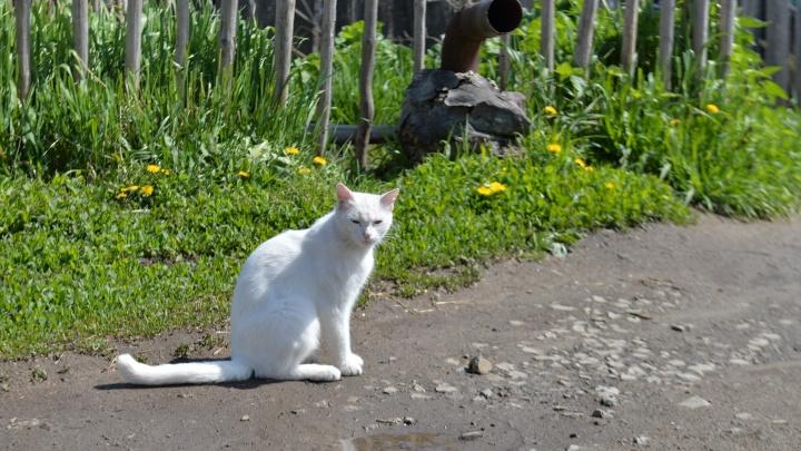 Екатеринбургские ветеринары позвали кошек и собак привиться от бешенства перед ЧМ