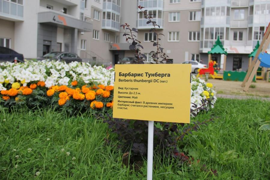 Во дворе — практически филиал ботанического сада