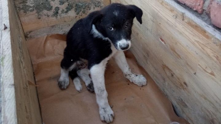 В Кунгуре два дня спасатели доставали бездомных щенков из-под бетонных плит