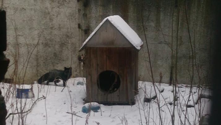 «Котлетку скушала, а гречку не хочет»: в промзоне на Уктусе встретили домашнюю лису