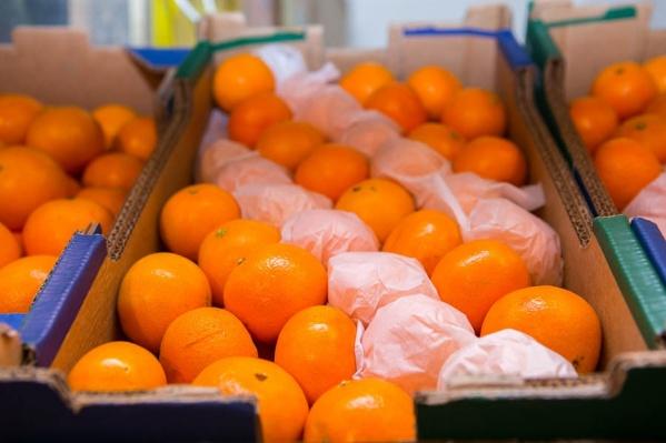 Жители Новосибирска несколько недель собирали виртуальные мандаринки, «потерявшиеся» на сайте НГС