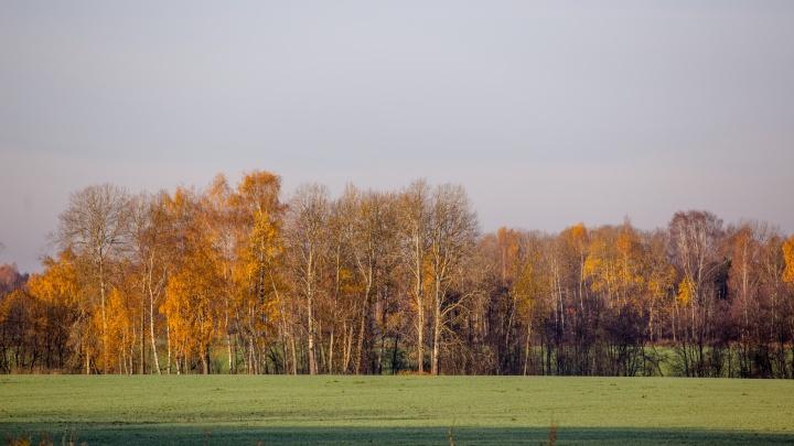 «У нас всё законно»: в Ярославской области на работу ищут браконьера