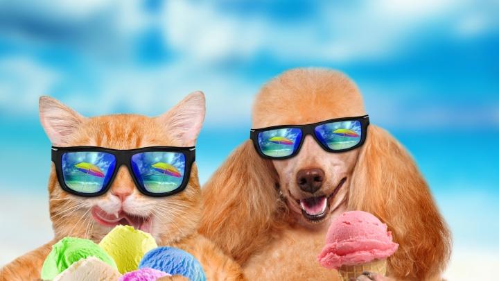 Успеть до отпуска: бронируем гостиницу коту и бьем холодом по лишнему весу