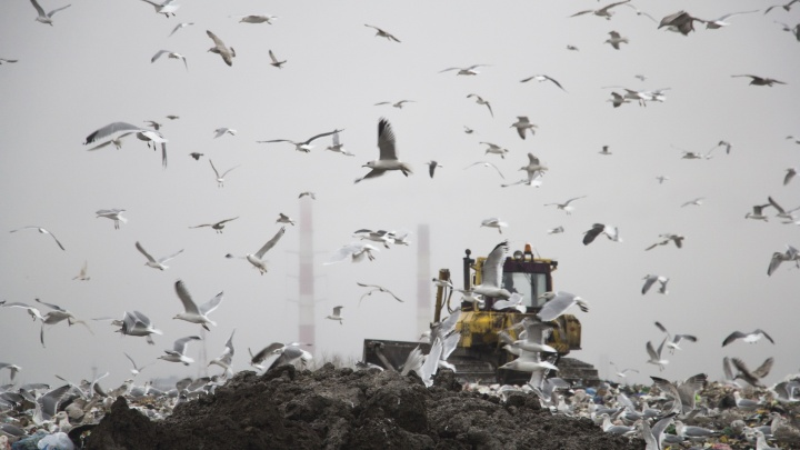 Чайки есть — места нет: как выглядит и чем «живёт» мусорный полигон за Окружным шоссе