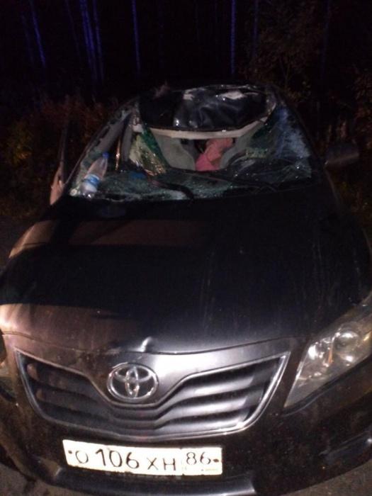 Лось выбежал на дорогу и попал под Toyota