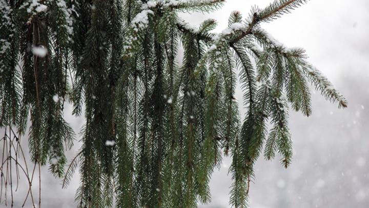 В Курганской области ожидается мокрый снег