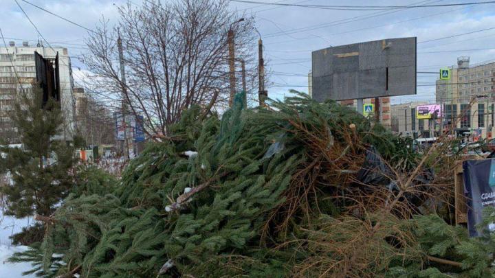 В первый день работы пунктов приёма ёлок челябинцы сдали сотни деревьев