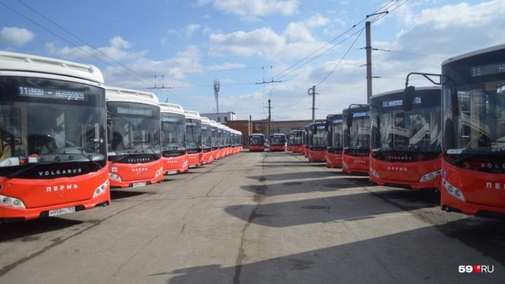 Власти Перми выставили штраф в 8,5 миллиона рублей производителю Volgabus