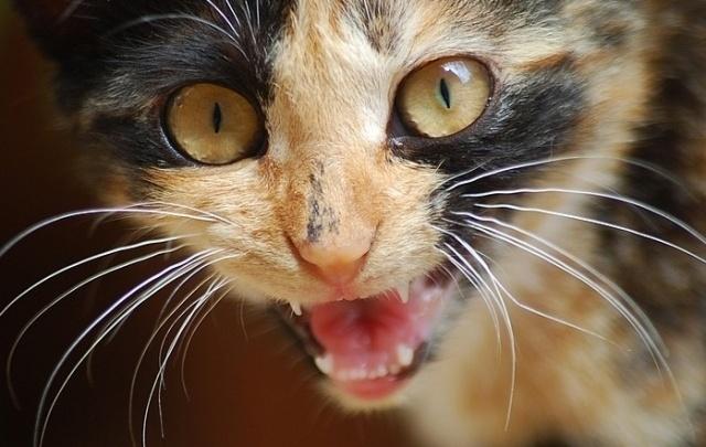 Смертельный кусь: на Дону бешеный кот напал на хозяйку и собаку