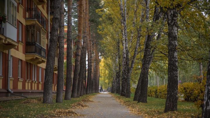 Опять сыро: в Новосибирск возвращаются холода с дождями и грозами