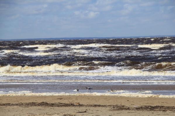 На берегу Белого моря замеряется повышенный радиационный фон