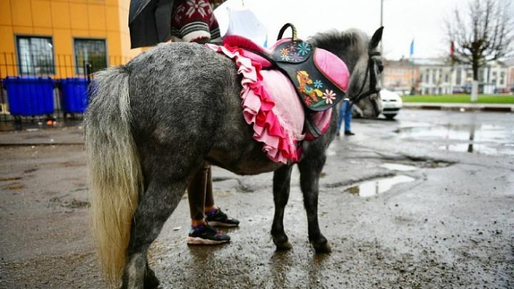 «Грызут лавки и ограждения»: ярославские чиновники обвинили лошадей в порче городского имущества